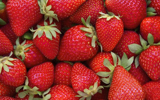 Vitamin & Immunity Boosting Formulations